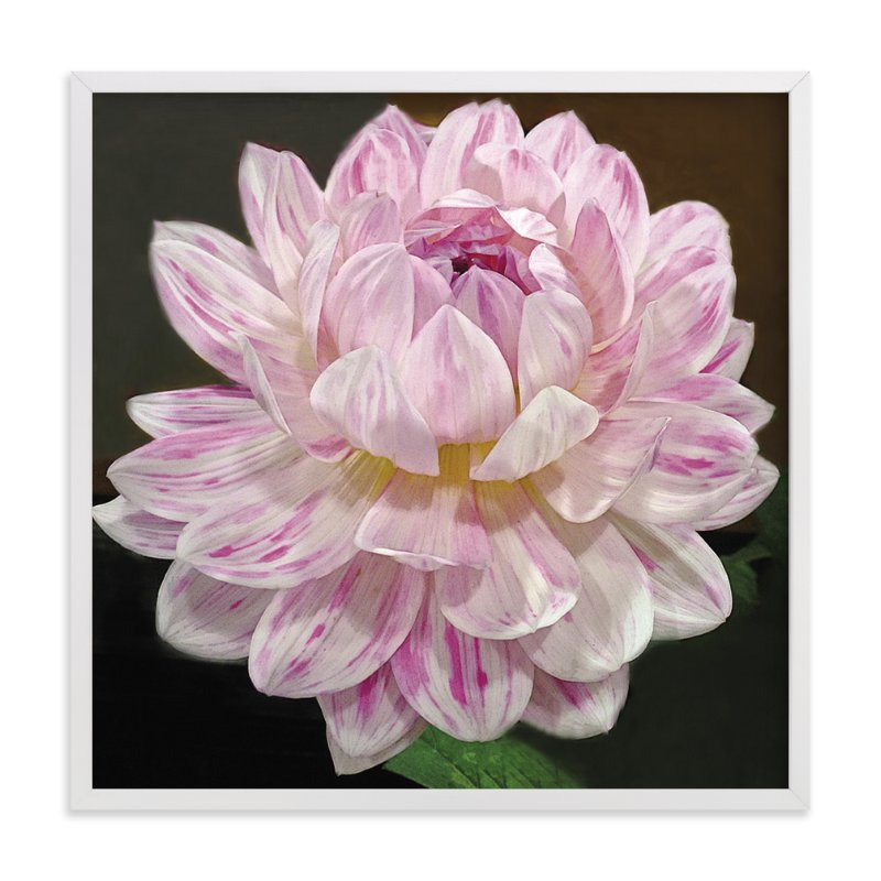 """Pink White Waterlily Dahlia"" - Art Print by Mazing Designs in beautiful frame options and a variety of sizes."