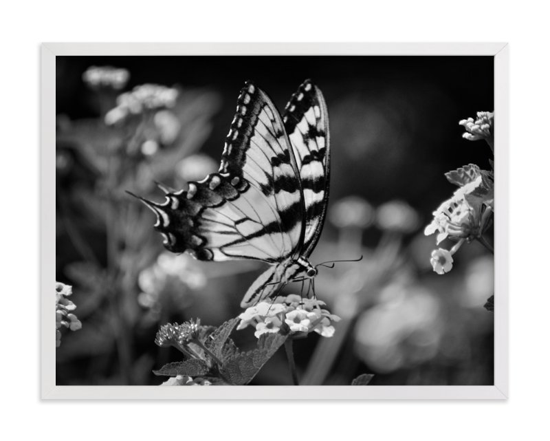 """Tiger Swallowtail"" - Art Print by Donna Rosser in beautiful frame options and a variety of sizes."