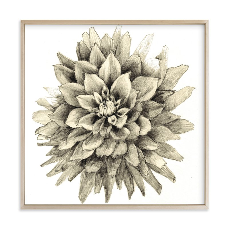 """Pencil Dahlia"" - Art Print by Sonal Nathwani in beautiful frame options and a variety of sizes."