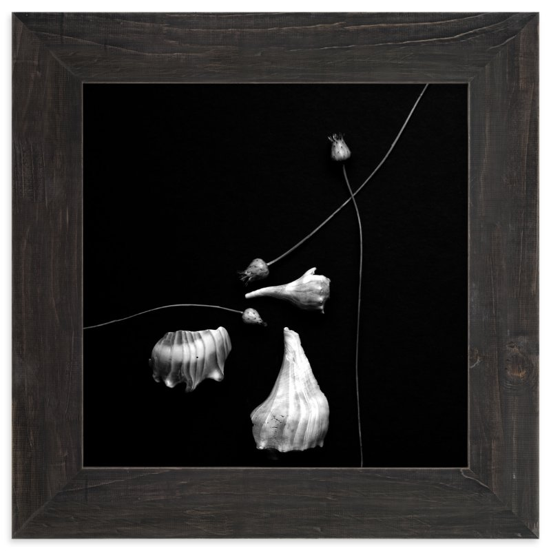 """""""Thistle and Shells No. 5"""" - Art Print by Tracie Christine in beautiful frame options and a variety of sizes."""