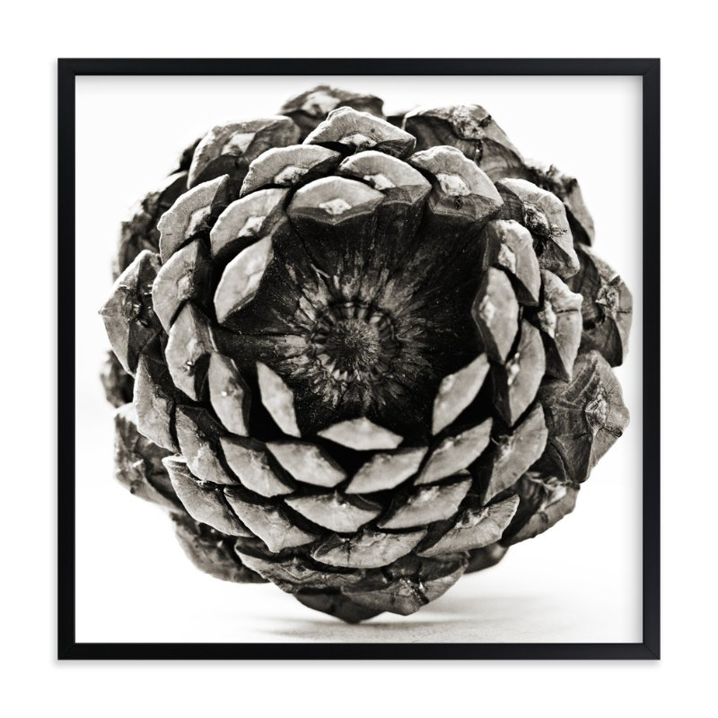 """Pine Cone Square "" - Art Print by Alexis Arnold in beautiful frame options and a variety of sizes."