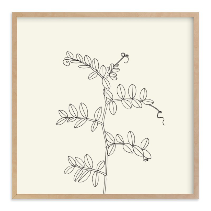 """Wild Pea"" - Art Print by Jorey Hurley in beautiful frame options and a variety of sizes."